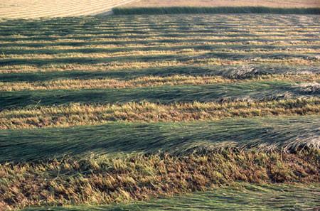 Grass KEep