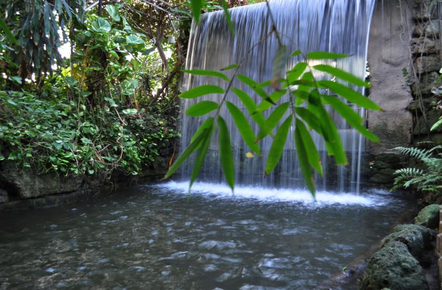 Tropical world leeds