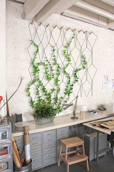 Indoor trellis on kitchen wall from planter to wall trellis